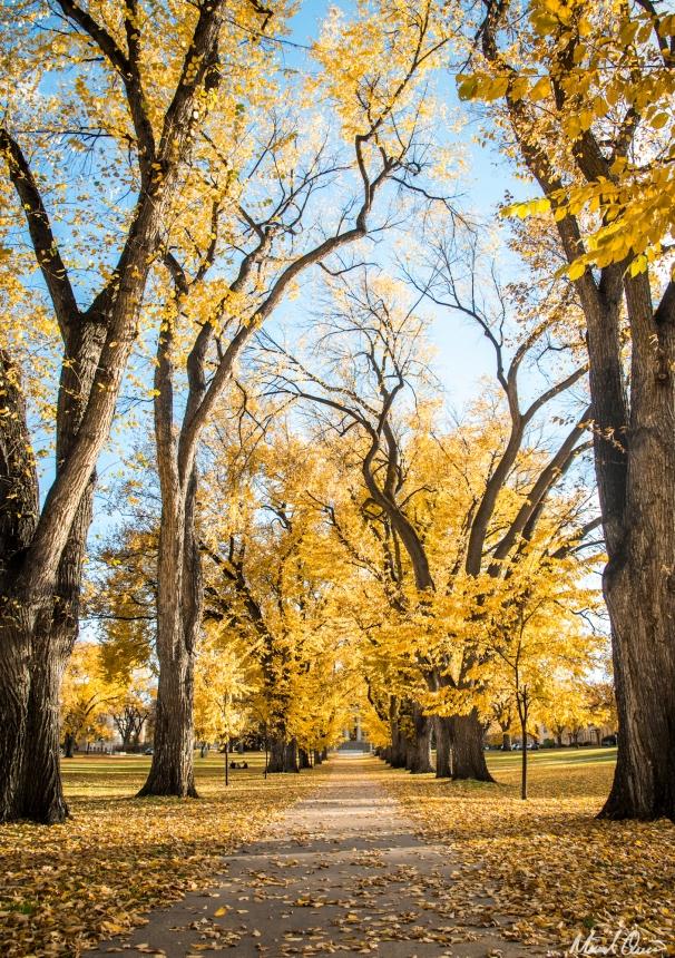 Autumn Oval