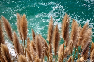 Big Sur Coastal Grasses