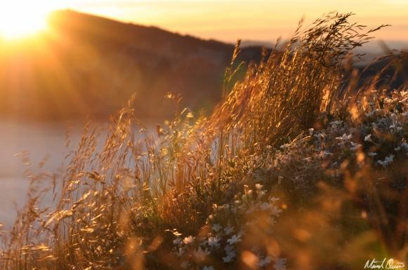 Crater Lake Sunset Grasses