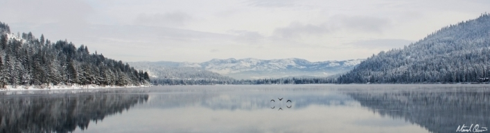 Donner Lake Geese