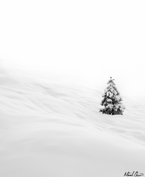 Minimalist Evergreen