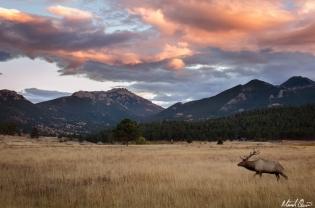 Moraine Park Bull Elk