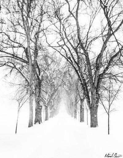 Oval Snow