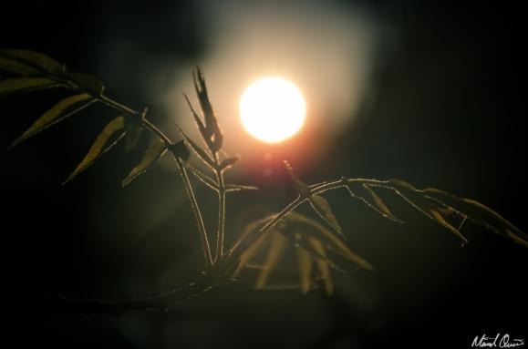Pistache Sunset