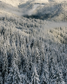 Foggy Snowy Forest