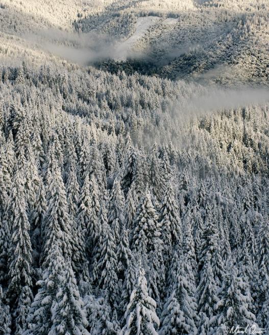 Foggy Snowy Forest