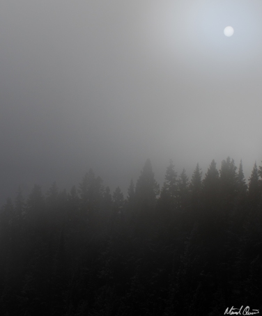 Foggy Sunlight