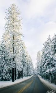 Highway 49 Snow