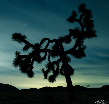 Joshua Tree Cloudy Night