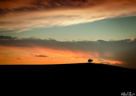 Lone Tree Sunset Hills