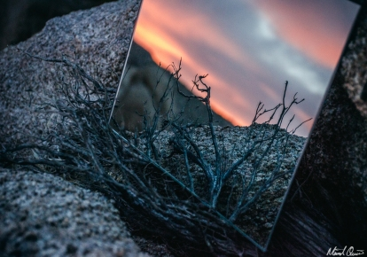 Mirror Sunset Bush