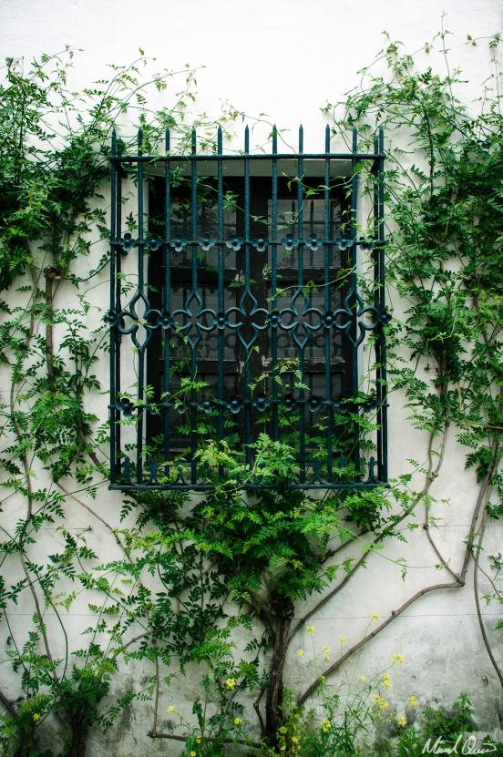 Sevilla Spain Alcazar Courtyard Vines