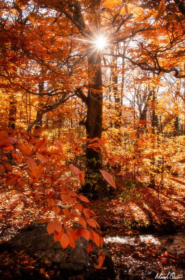 Boston Autumn Flare