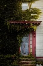 Salem Grown Over House