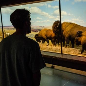 Tyler Bison Natural History